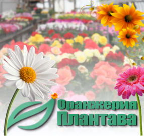 Плантава ЕООД - Оранжерия град София